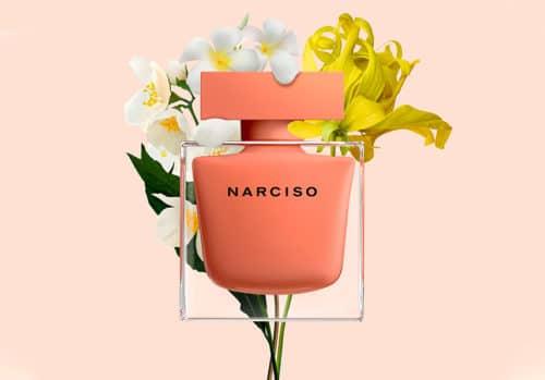 Ambrée Narciso